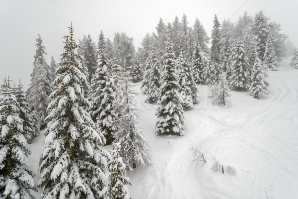 Névoa inverno montanha floresta belo paisagem Foto stock © mahout