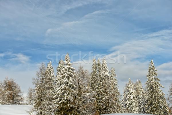 Kış orman bulutlu mavi gökyüzü ağaç ahşap Stok fotoğraf © mahout