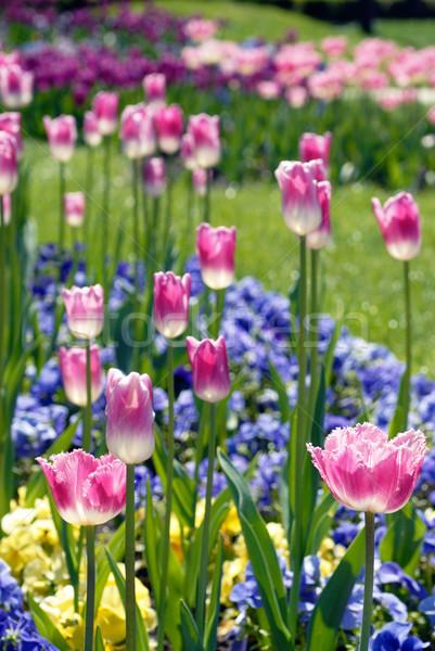 Színes virágágy virág tavasz fű tájkép Stock fotó © mahout