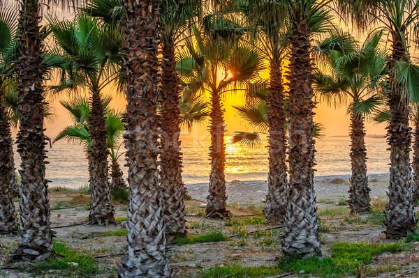 Puesta de sol playa tropical palmas cielo árbol sol Foto stock © mahout