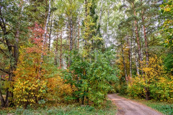 осень лес красивой красочный дерево Сток-фото © mahout