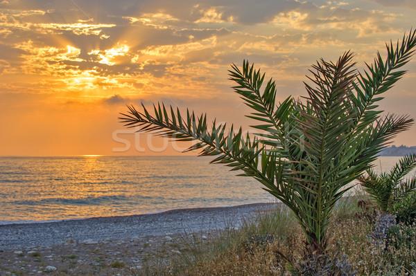 Naplemente tenger kavics tengerpart égbolt természet Stock fotó © mahout