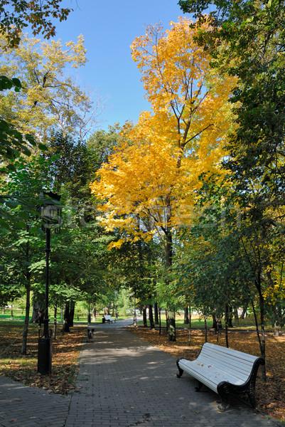 Otono parque árbol hierba madera forestales Foto stock © mahout