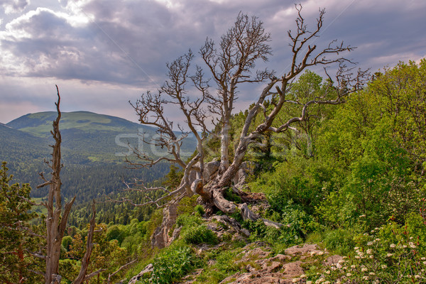 Montanha paisagem verão floresta morto madeira Foto stock © mahout