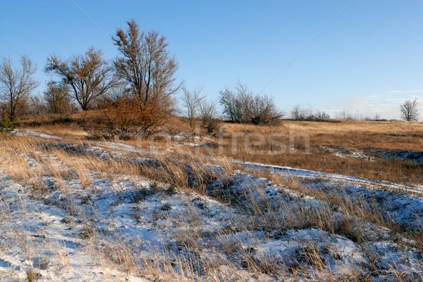 Invierno paisaje cielo árbol naturaleza nieve Foto stock © mahout