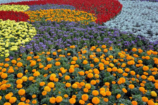 Décoratif champ de fleurs fleurs herbe fond été Photo stock © mahout