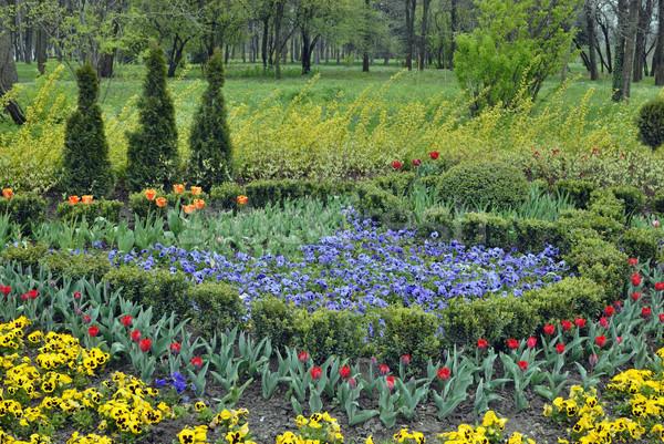 Flor césped primavera jardín hierba naturaleza Foto stock © mahout