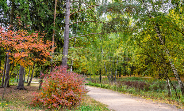 Outono parque belo colorido floresta árvore Foto stock © mahout