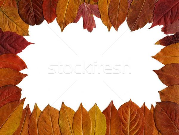 Piros őszi levelek keret fehér absztrakt levél Stock fotó © mahout