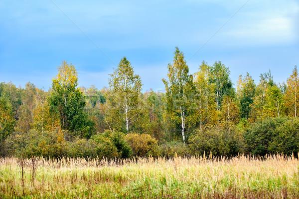 осень лес ярко цветами небе дерево Сток-фото © mahout