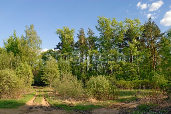 сельский дороги лес весны дерево трава Сток-фото © mahout