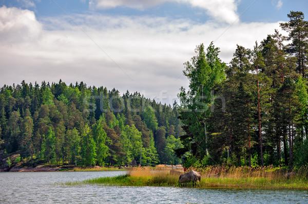 пейзаж Финляндия соснового лес Сток-фото © mahout