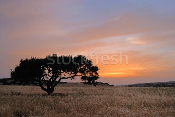 Stockfoto: Eenzaam · boom · weide · dawn · hemel · wolken