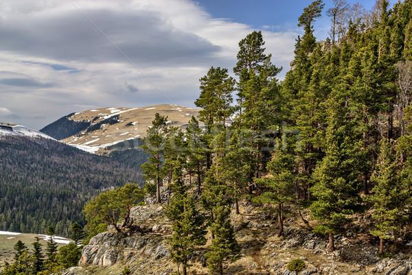горные пейзаж рано весны древесины снега Сток-фото © mahout