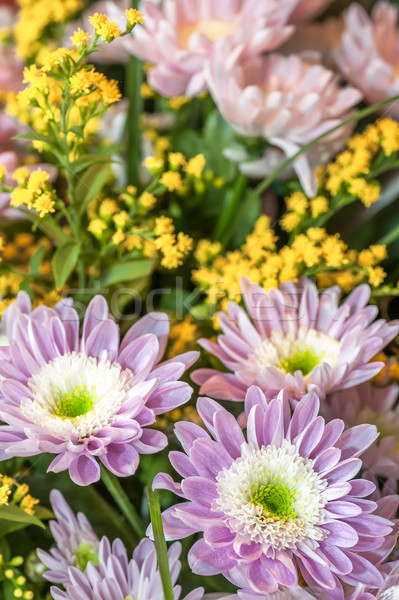 Bouquet of aster flowers Stock photo © mahout