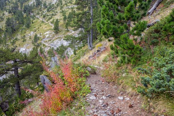 Trekking chemin montagnes Grèce arbre forêt Photo stock © mahout
