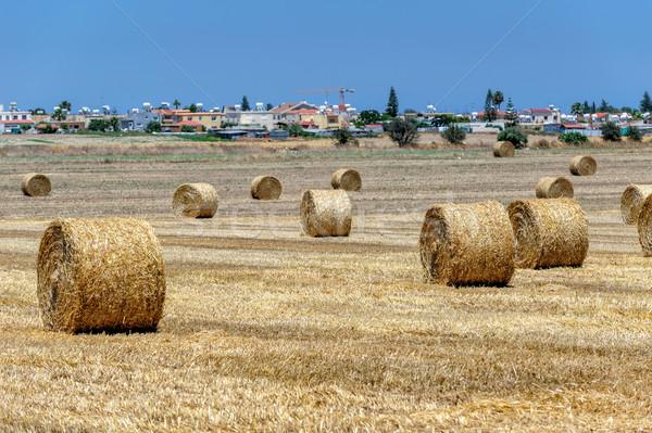 Veld boerderij dorp horizon hemel landschap Stockfoto © mahout