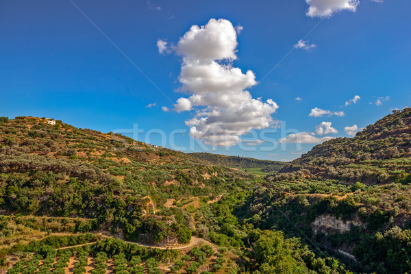 Olive groves on hills in Crete, Greece Stock photo © mahout