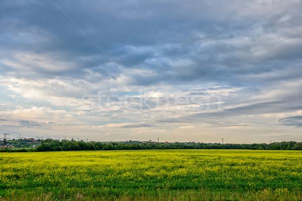 луговой желтые цветы облачный небе трава весны Сток-фото © mahout