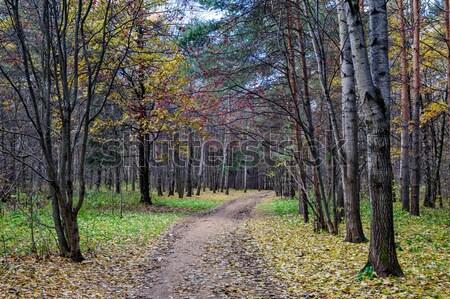 ösvény ősz park fű út erdő Stock fotó © mahout