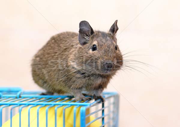 Cage cheveux souris animal fourrures cute Photo stock © mahout