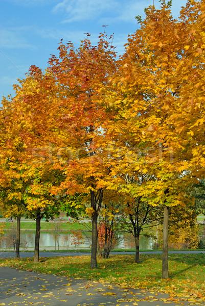 осень дерево парка древесины лес природы Сток-фото © mahout