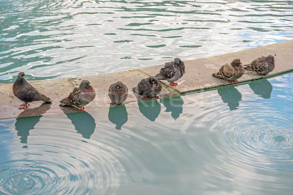 Víz csetepaté város természet utca madár Stock fotó © mahout