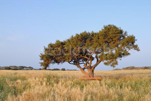 Eenzaam boom weide hemel wolken gras Stockfoto © mahout