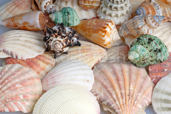 Seashells background Stock photo © mahout