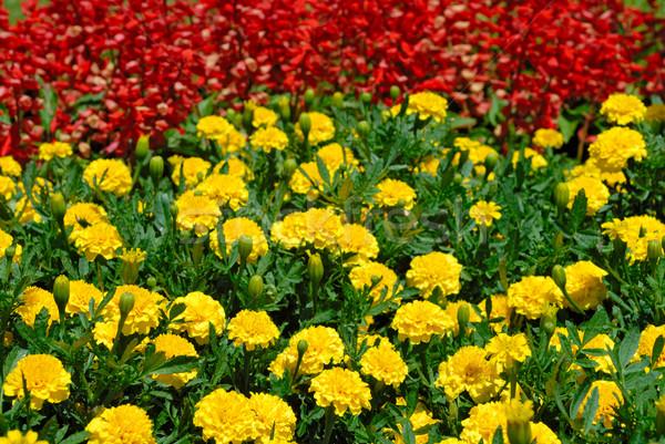 Veelkleurig bloem voorjaar landschap achtergrond Stockfoto © mahout