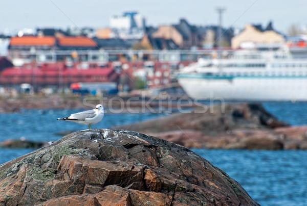 鴎 岩 ビーチ 水 鳥 青 ストックフォト © maisicon