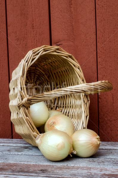 Onions. Stock photo © maisicon