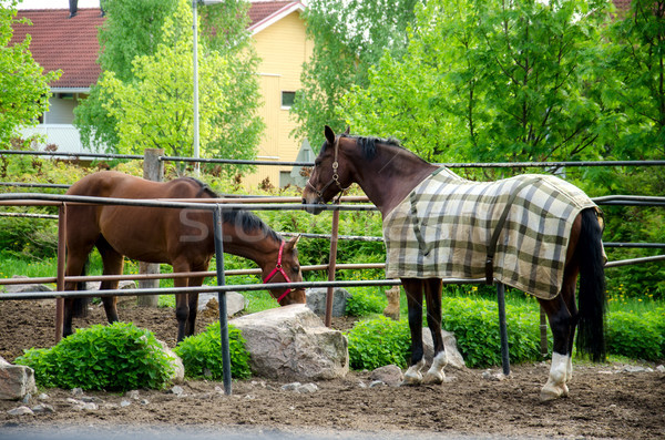 Ló áll szemek természet nyár csoport Stock fotó © maisicon