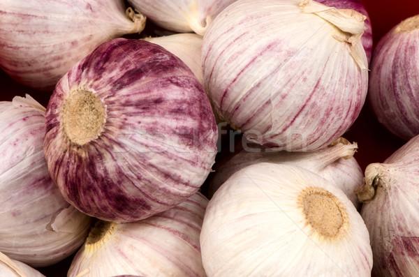 garlic. Stock photo © maisicon