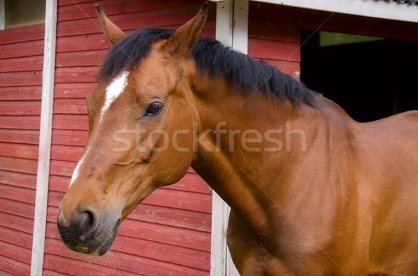 Horse. Stock photo © maisicon