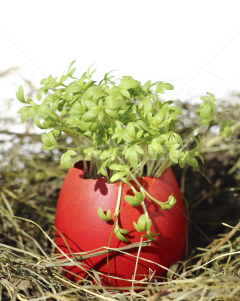Easter eggs with garden cress Stock photo © Makse