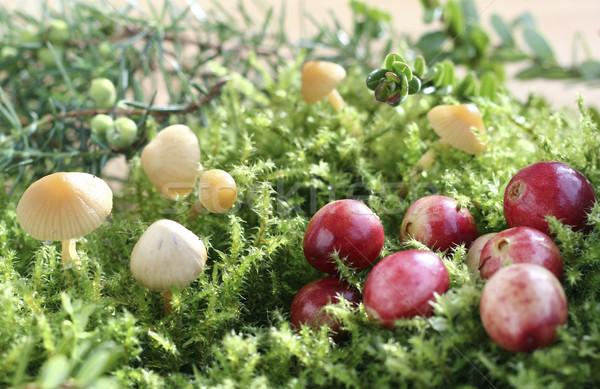 Cranberries Stock photo © Makse