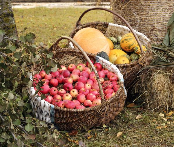 Sonbahar bahçe elma büyük Stok fotoğraf © Makse