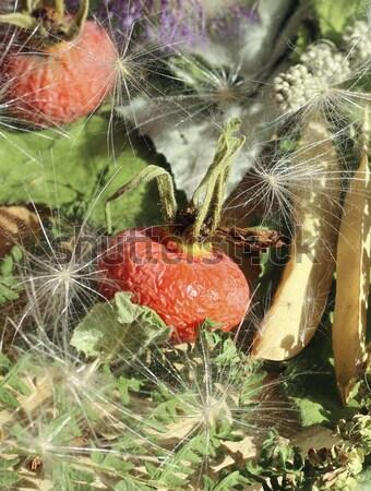 Dried rosehip berries Stock photo © Makse