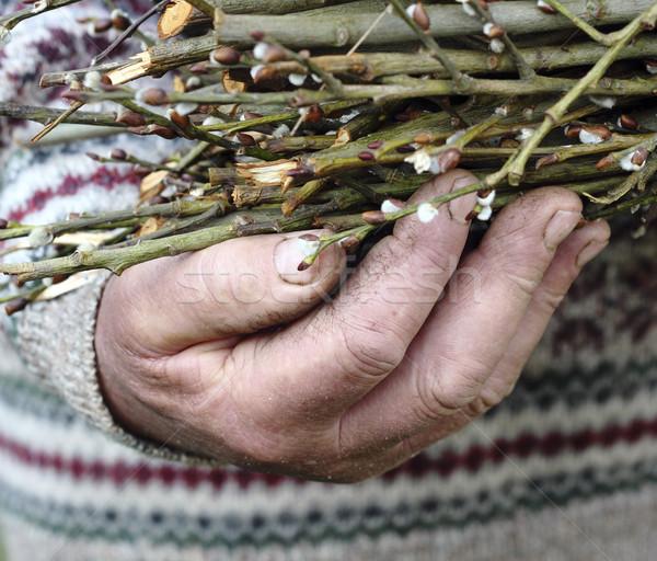 Yaşlı adam el doğa erkekler yeşil Stok fotoğraf © Makse