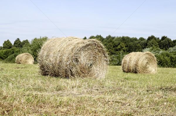 Hay rolls  Stock photo © Makse