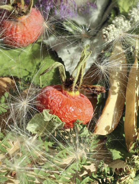 Kurutulmuş karpuzu otlar gıda Stok fotoğraf © Makse
