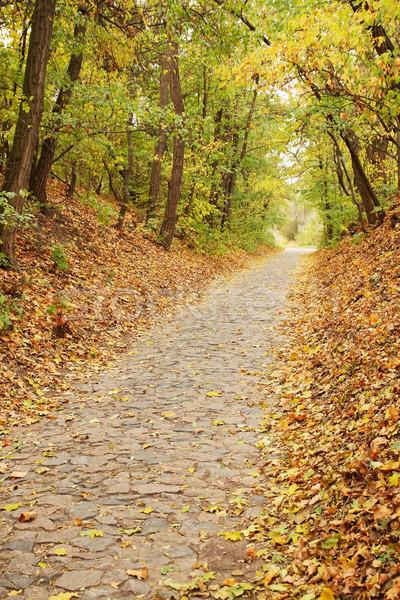 Najaar steegje esdoorn bos vallen bladeren Stockfoto © mallivan