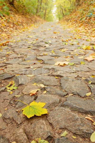 Vel steegje steen najaar esdoorn bos Stockfoto © mallivan