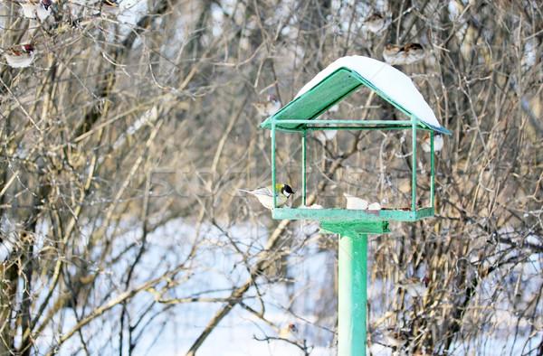 птиц парка дома продовольствие снега Сток-фото © mallivan