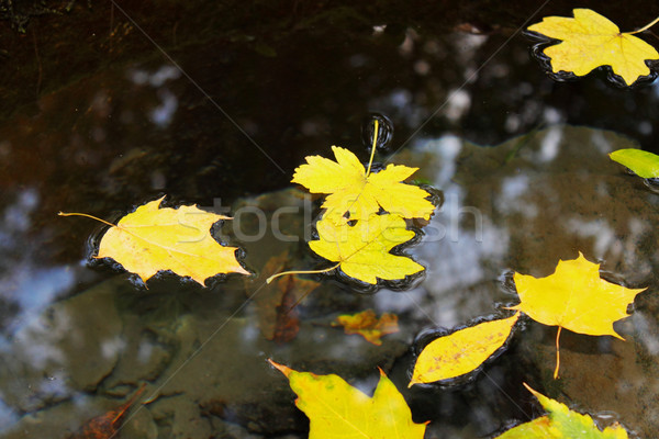 листьев воды осень желтый лес Сток-фото © mallivan