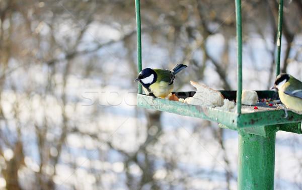 Feeder for wild birds Stock photo © mallivan