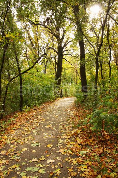 осень клен аллеи лес падение листьев Сток-фото © mallivan