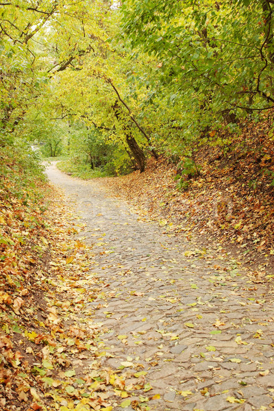 Geçit taş sonbahar akçaağaç orman düşen Stok fotoğraf © mallivan
