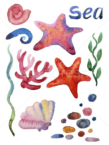 Stock fotó: Szett · különböző · tenger · tengeri · csillag · vízfesték · illusztráció
